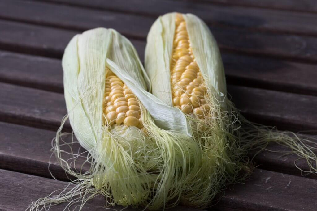 sustainable sourcing corn fibrle