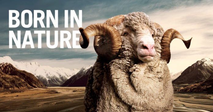 Merino: Born in Nature (Photo: NZ Wool Classers Association)